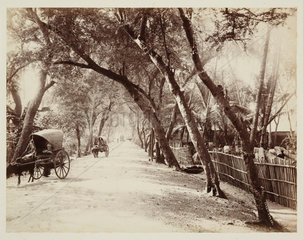 View of a road with bullock carts  Ceylon  c 1870.