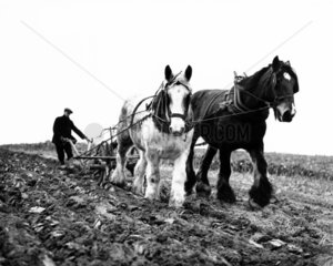 A farmer steering a traditional cart plough