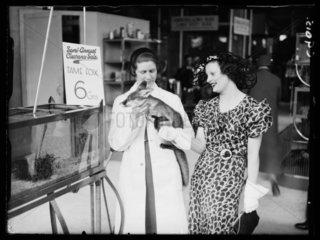 Fox for sale at Selfridges  1934.