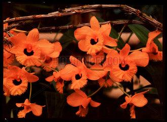 Orange flowers  c 1940.