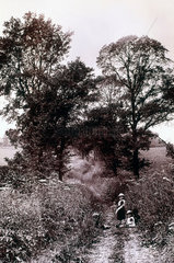 Children in a country lane  c 1890s.