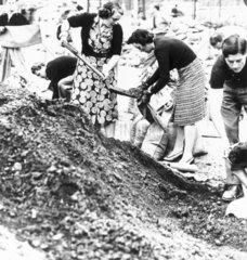 Women filling sandbags  13 September 1939.