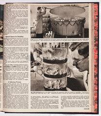 Producing penicillin  1943.