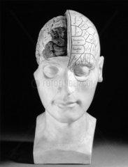 Phrenological head  French.