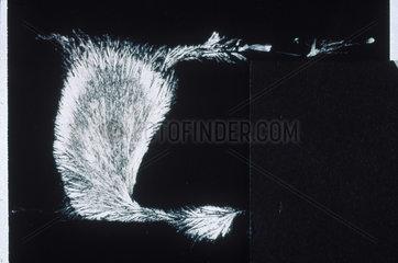 Sodium silicate. Light micrograph in darkgr