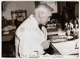 Professor Alexander Fleming  'Discoverer of Penicillin'  1943.