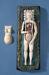 Anatomical figure of a pregnant woman  possibly Italian  1600-1800.