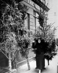 Woman carrying a christmas tree  Covent Garden  27 November 1936.