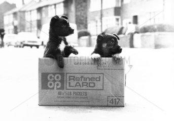 Abandoned puppies  May 1978.