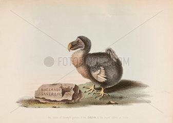 The Dodo  1626.