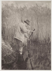 'A Reed-Cutter at Work'  1886.