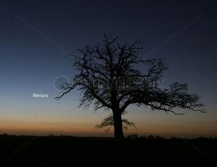 Mercury in the morning sky  2006.