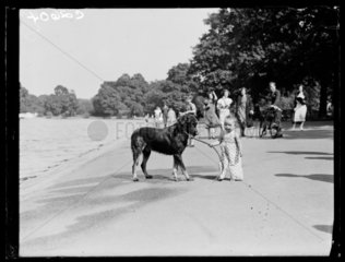 Toddler with a dog  Hyde Park Lido  London  1933.