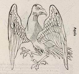 The constellation of Aquila  1488.