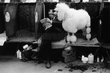 Cruft's Dog Show  London  1968.