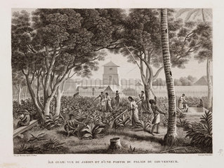 Garden and Palace of the Governor  Guam  1817-1820.