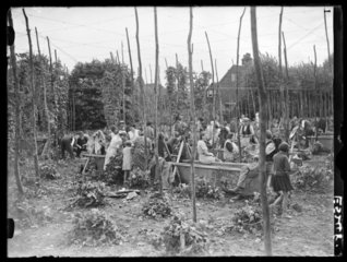 Hop pickers at work  Kent  29 August 1935.