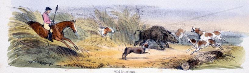 'Wild Boarhunt'  c 1845.