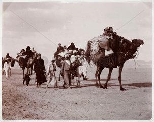 Camel train  c 1930.