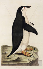 Penguin  1776.
