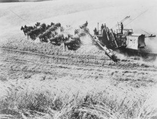 Mule-powered combine harvester  USA  c 1930s.
