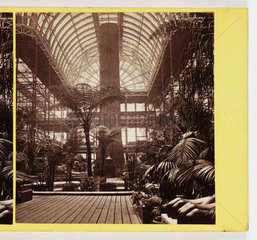 Interior of Palm House  c 1865 .