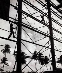 Builders balance on girders of new sugar factory  Guyana  1958.