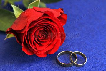 Berlin  Deutschland  zwei goldene Ringe und eine rote Rose