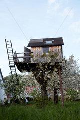 Sipplingen  Deutschland  ein Baumhaus in bluehenden Kirschbbaeumen