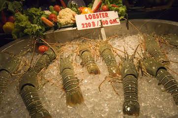 Patong  Thailand  Verkauf von Lobster