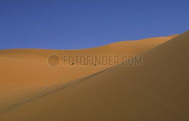 Merzouga  Marokko  Duenenlandschaft der Erg Chebbi