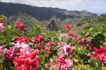 Chinamada  Spanien  im Anaga-Gebirge