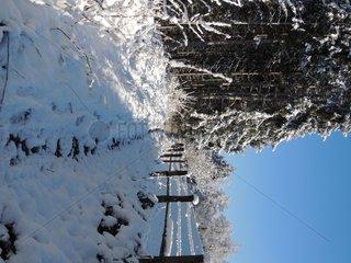 Weg im Winter und Wald