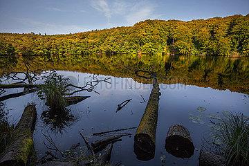 Beech Forest - Ruegen