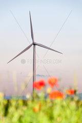 Windkraft  Eure-et-Loir  Frankreich