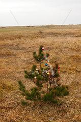 Weihnachtsbaum auf der Wiese