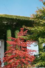 Herbstfaerbung am Bundeskanzleramt