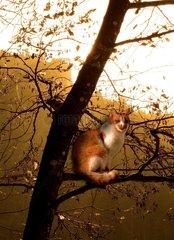 Katze am Baum Kater Katze Haustier
