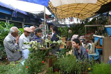 Tier und Pflanzenmarkt in Shanghai