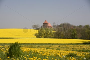 Western Pomerania  rape fields