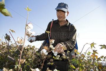 Provinz Xinjiang  Baumwollanbau