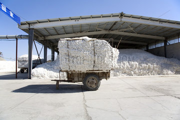 Provinz Xinjiang  Baumwollverarbeitung