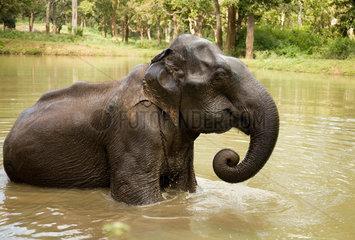 Nationalpark Elefanten