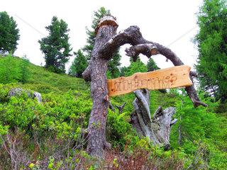 Zirbenweg am Graukogel ein Naturerlebnisweg im Gasteinertal