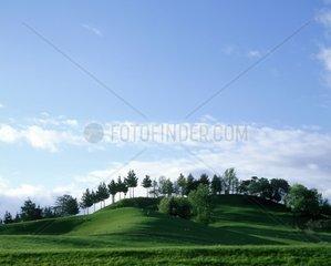 New Zealand  North Island  landscape