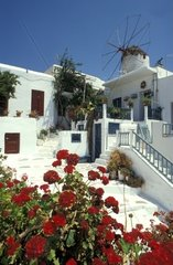 Greece  Cyclades Islands  Mykonos  house and windmill