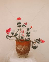 Blumentopf Kreta