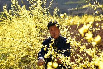 CHINA-HENAN-FARM WORK (CN)