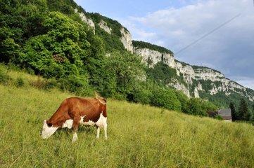 France  Haute-Savoie  Avant Pays Savoyarde  the Chartreuse Natural Park