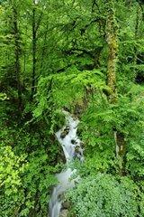 France  Haute-Savoie  Avant Pays Savoyarde  landscape and in the Chartreuse Natural Park